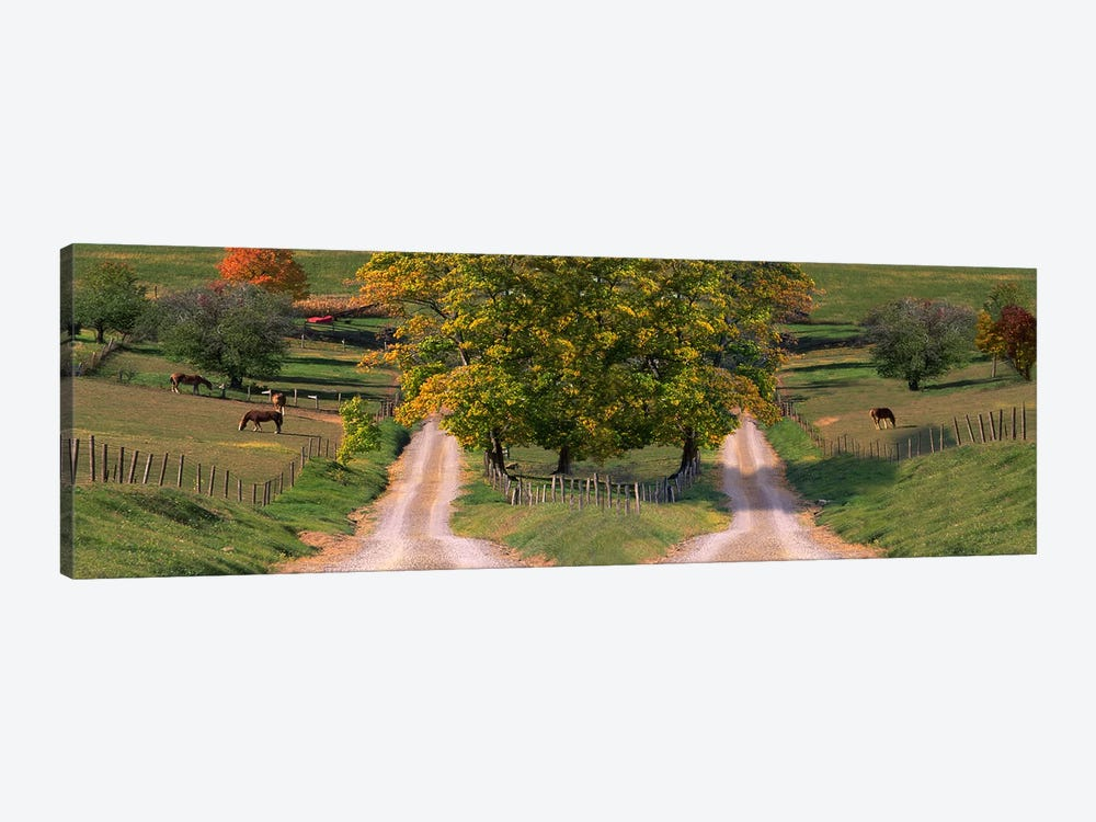 Two dirt roads passing through farms in autumn by Panoramic Images 1-piece Canvas Artwork