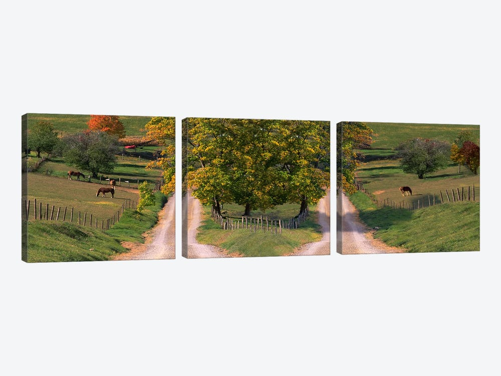 Two dirt roads passing through farms in autumn by Panoramic Images 3-piece Canvas Artwork