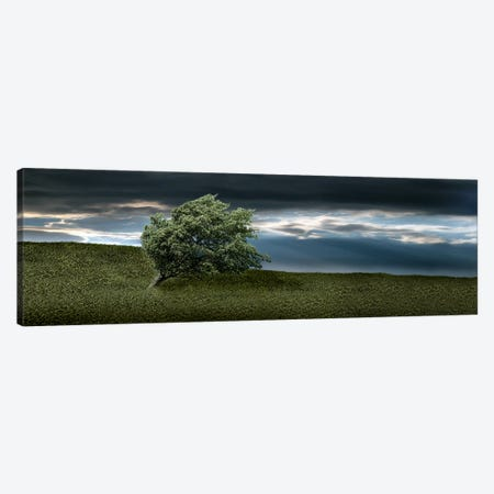Tree swaying in storm Canvas Print #PIM9936} by Panoramic Images Canvas Print