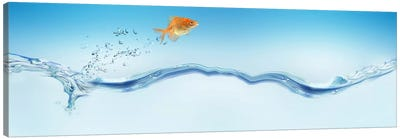 Goldfish jumping out of water Canvas Print #PIM9942