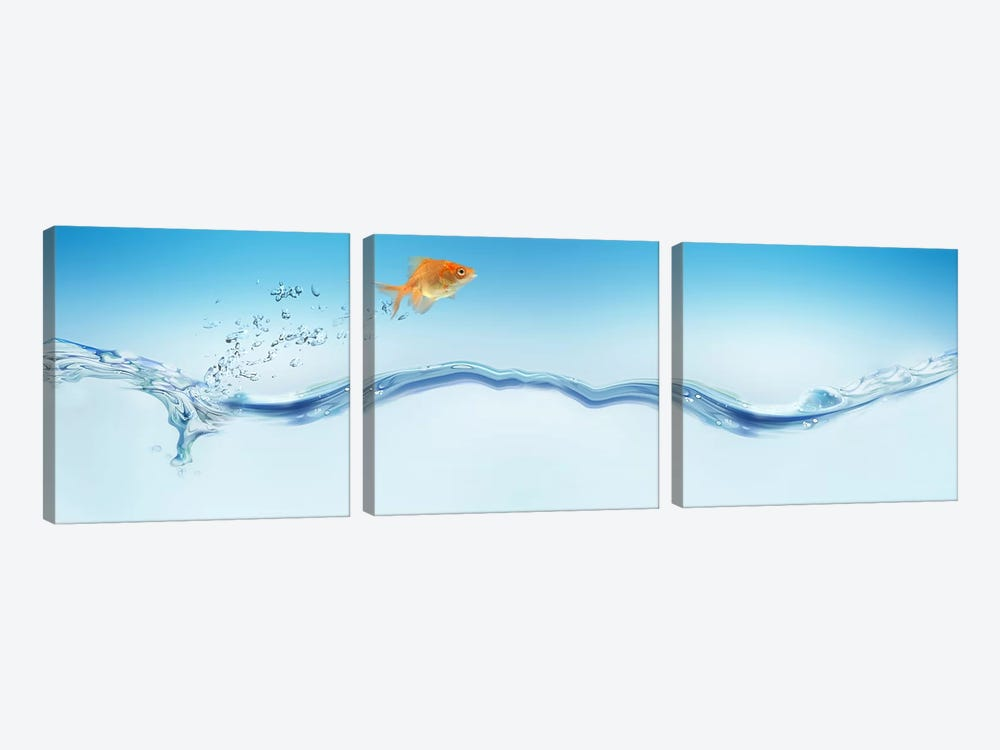 Goldfish jumping out of water by Panoramic Images 3-piece Art Print