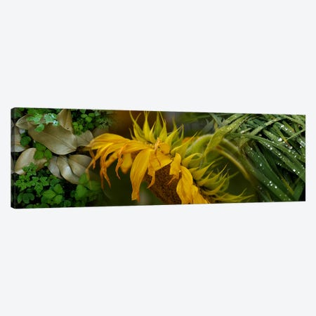 Close-up of leaves with yellow flower Canvas Print #PIM9945} by Panoramic Images Canvas Wall Art
