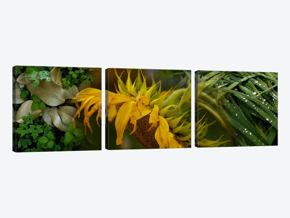 Close-up of leaves with yellow flower by Panoramic Images 3-piece Canvas Artwork