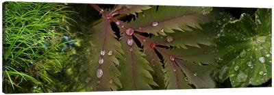 Close-up of leaves with water droplets Canvas Art Print
