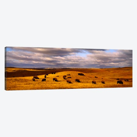 High angle view of buffaloes grazing on a landscapeNorth Dakota, USA Canvas Print #PIM994} by Panoramic Images Canvas Art Print