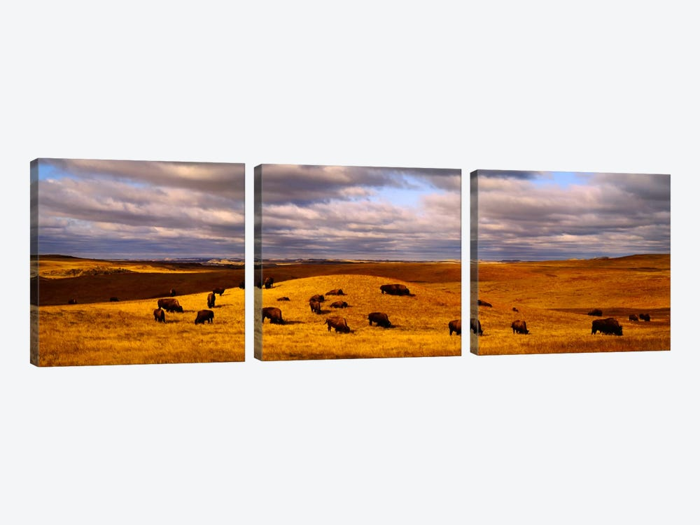 High angle view of buffaloes grazing on a landscapeNorth Dakota, USA by Panoramic Images 3-piece Art Print