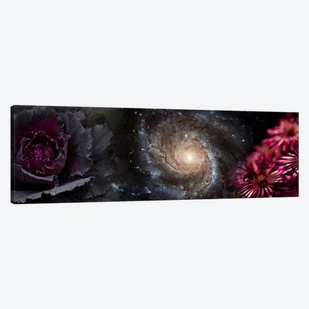 Cabbage with galaxy and pink flowers Canvas Print #PIM9950} by Panoramic Images Canvas Artwork