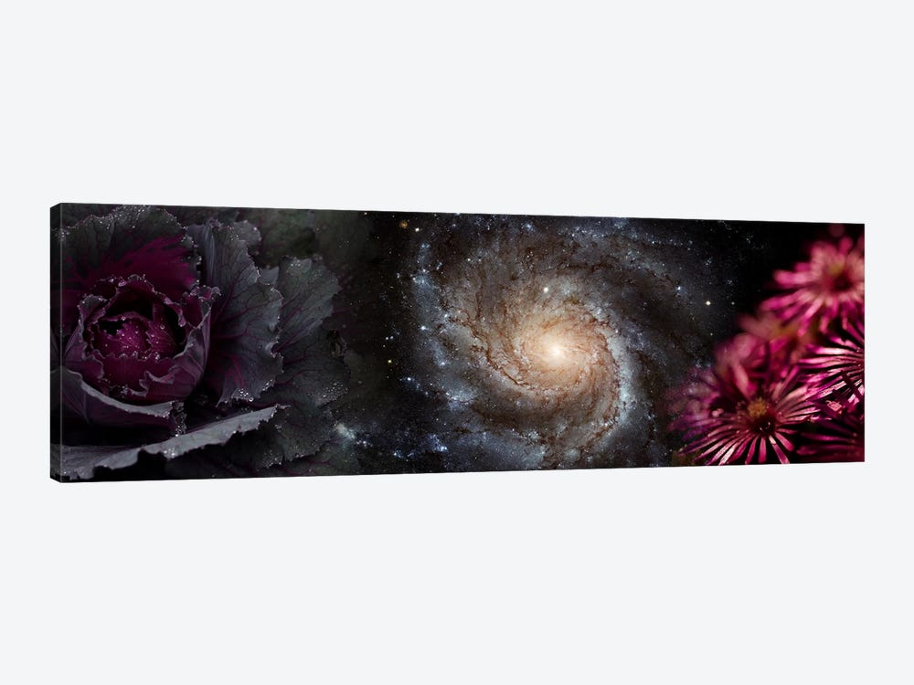 Cabbage with galaxy and pink flowers by Panoramic Images 1-piece Canvas Wall Art