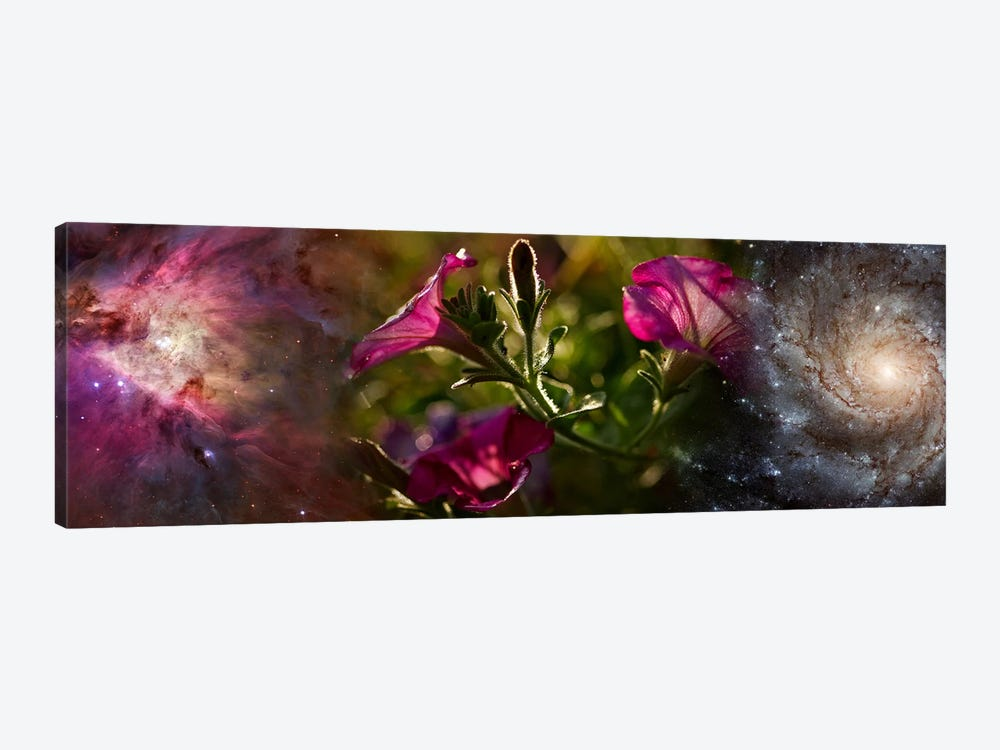 Close-up of flowers and universe by Panoramic Images 1-piece Canvas Wall Art