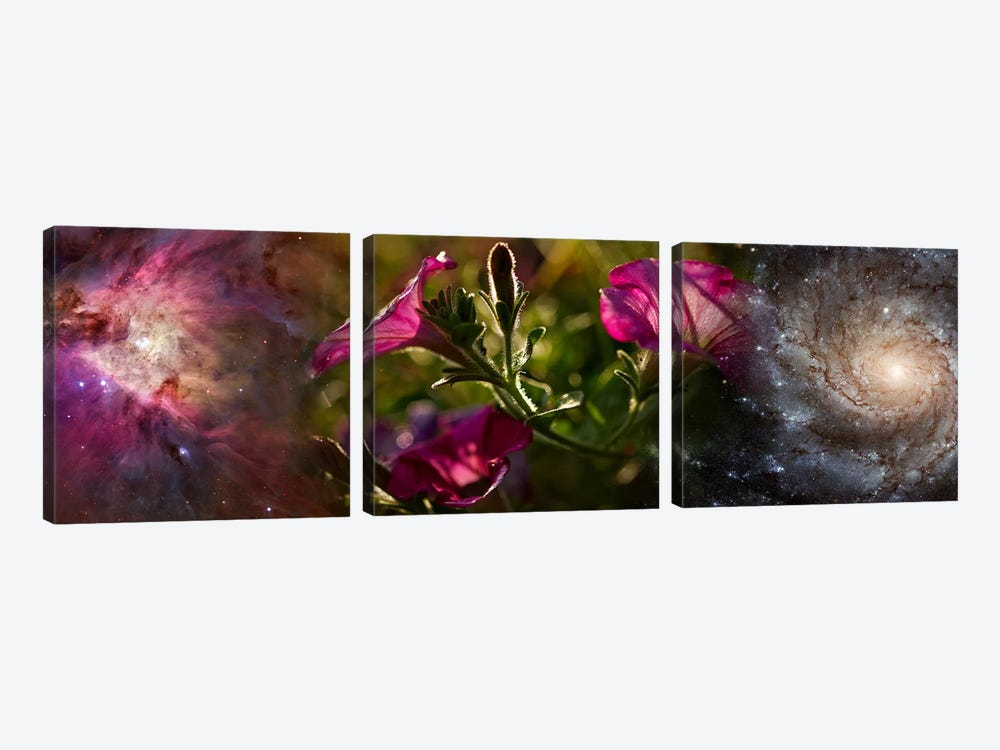 Close-up of flowers and universe by Panoramic Images 3-piece Canvas Art