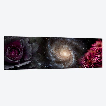 Cabbage with galaxy and pink flowers Canvas Print #PIM9956} by Panoramic Images Canvas Art Print