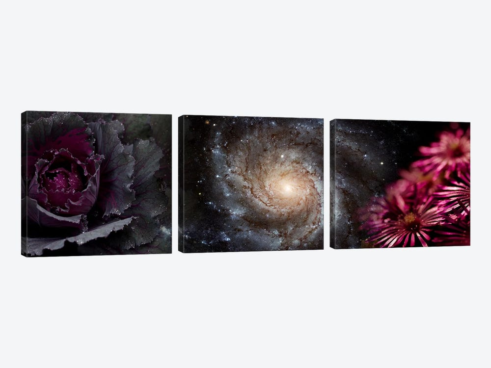 Cabbage with galaxy and pink flowers by Panoramic Images 3-piece Canvas Wall Art