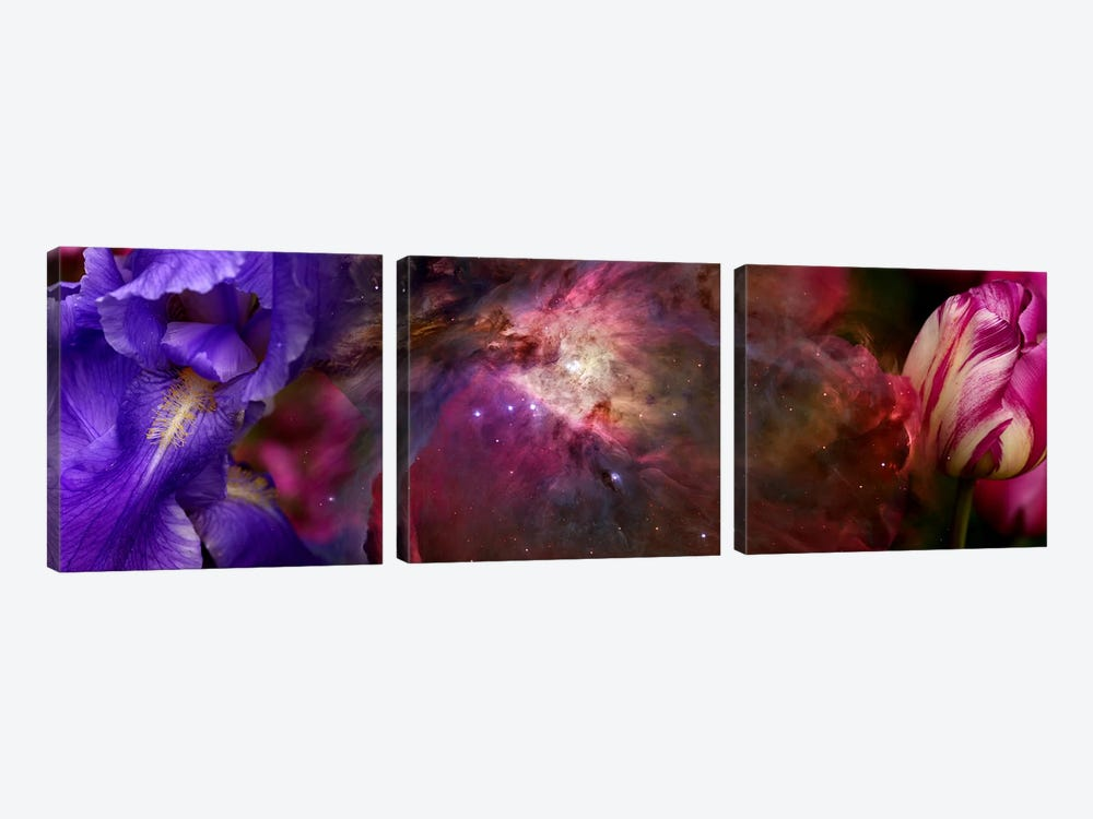 Close-up of Hubble galaxy with iris and tulip flowers by Panoramic Images 3-piece Art Print