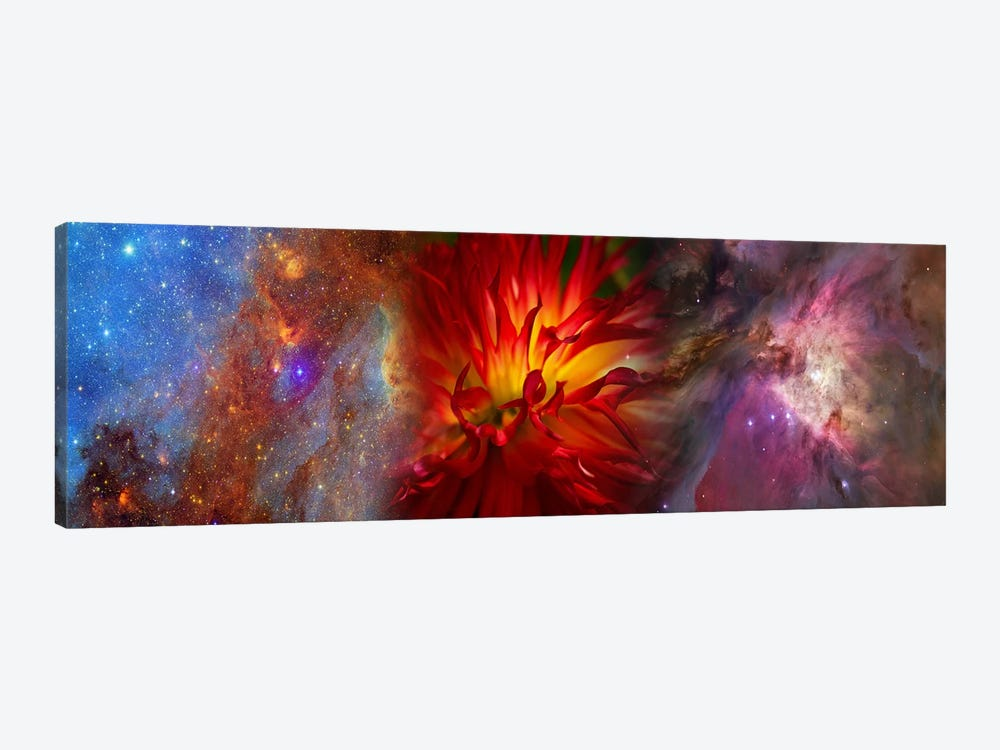 Hubble galaxy with red chrysanthemums by Panoramic Images 1-piece Canvas Print