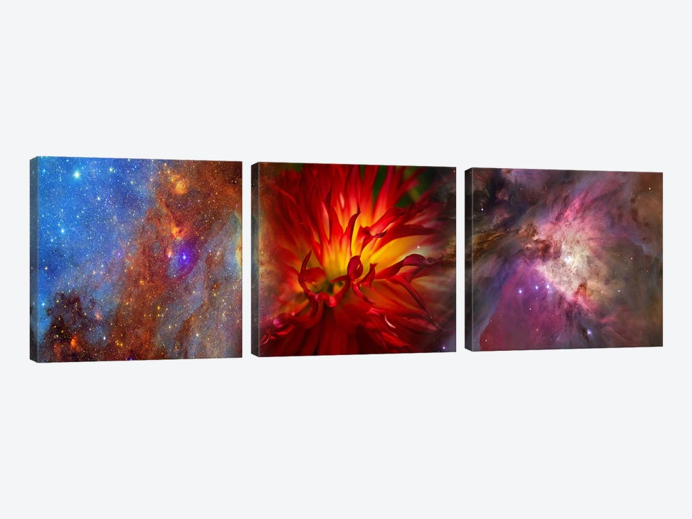 Hubble galaxy with red chrysanthemums by Panoramic Images 3-piece Canvas Art Print