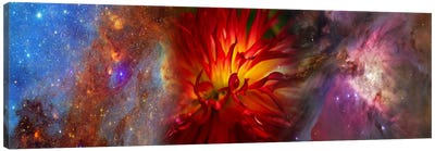 Hubble galaxy with red chrysanthemums Canvas Art Print