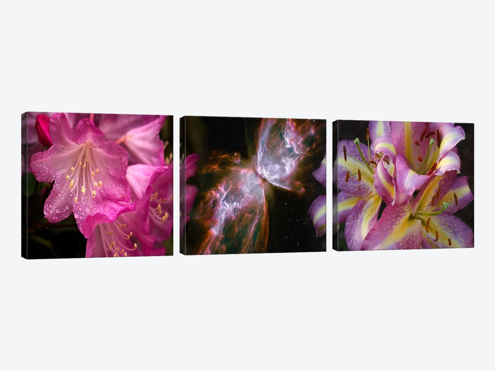 Butterfly nebula with iris and pink flowers by Panoramic Images 3-piece Canvas Art Print