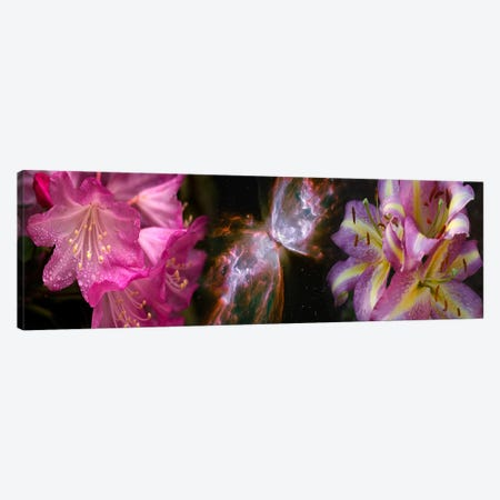 Butterfly nebula with iris and pink flowers Canvas Print #PIM9960} by Panoramic Images Canvas Art Print