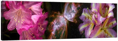 Butterfly nebula with iris and pink flowers Canvas Art Print