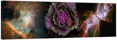 Cabbage with butterfly nebula Canvas Print #PIM9961