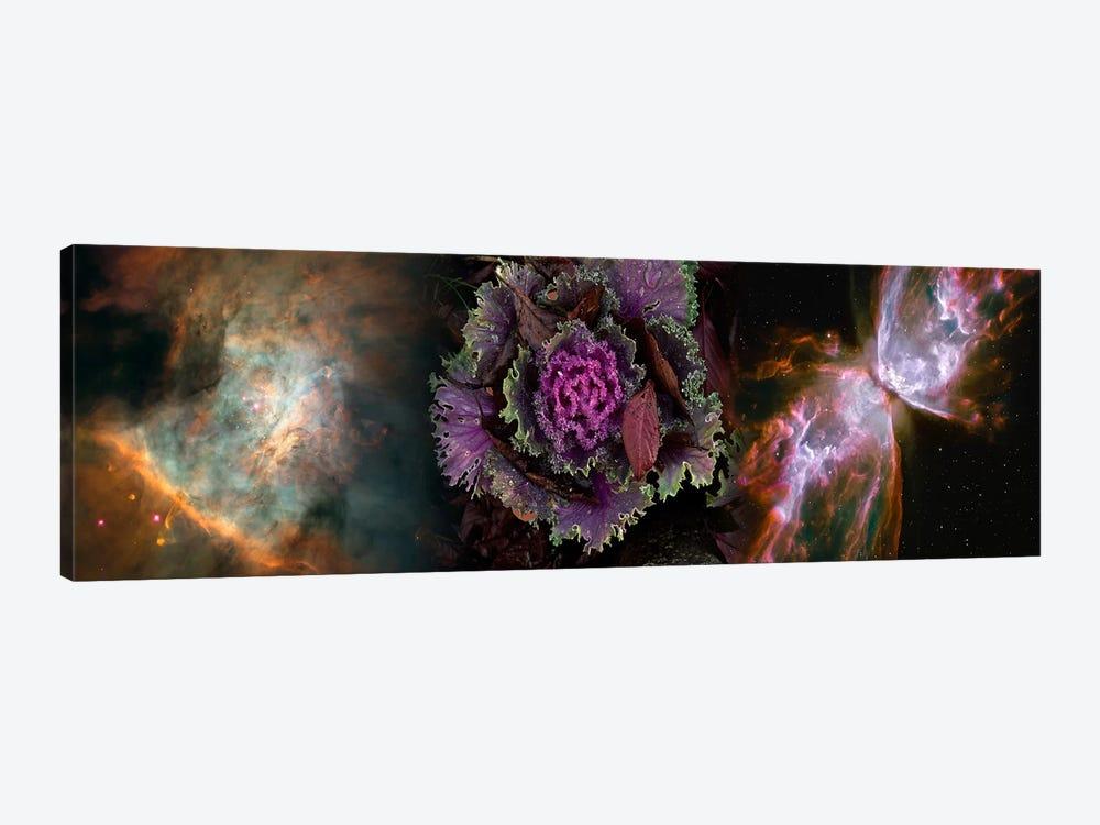 Cabbage with butterfly nebula by Panoramic Images 1-piece Canvas Artwork