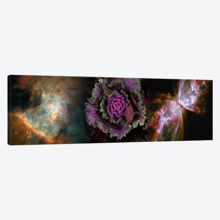 Cabbage with butterfly nebula Canvas Print #PIM9961} by Panoramic Images Canvas Art Print