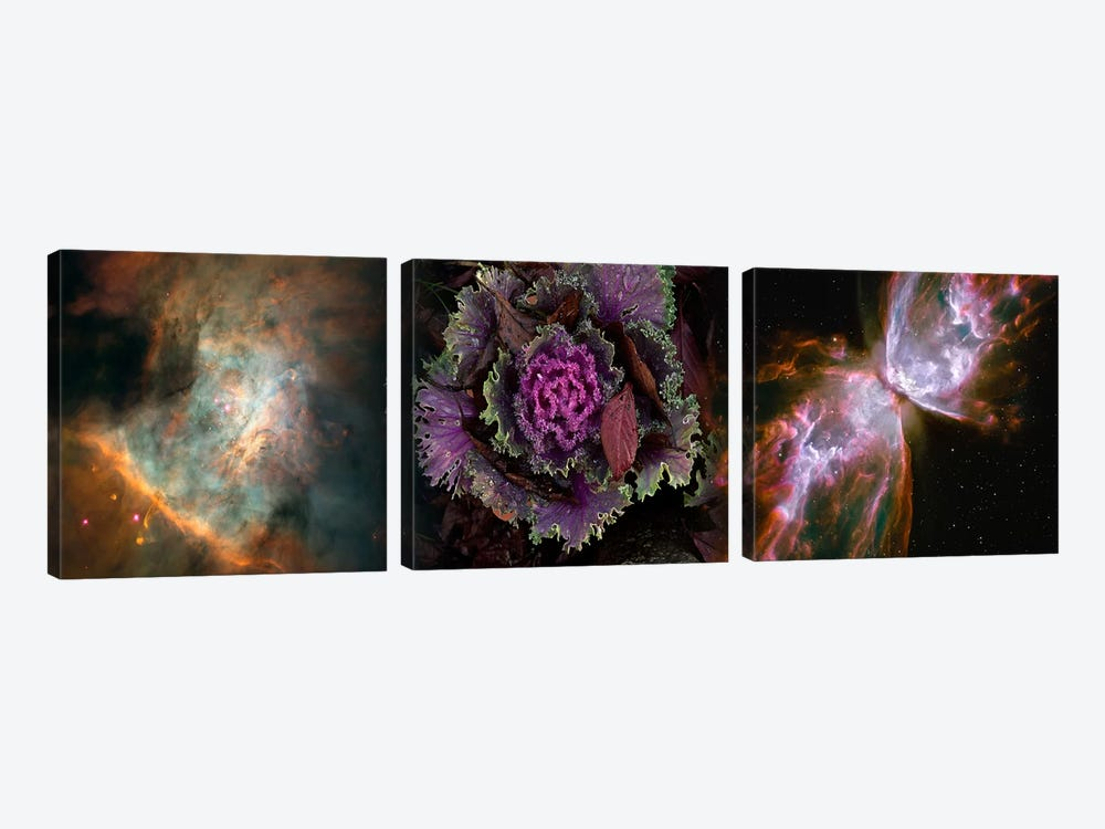 Cabbage with butterfly nebula by Panoramic Images 3-piece Canvas Art