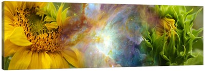 Two sunflowers with gaseous nebula Canvas Print #PIM9962