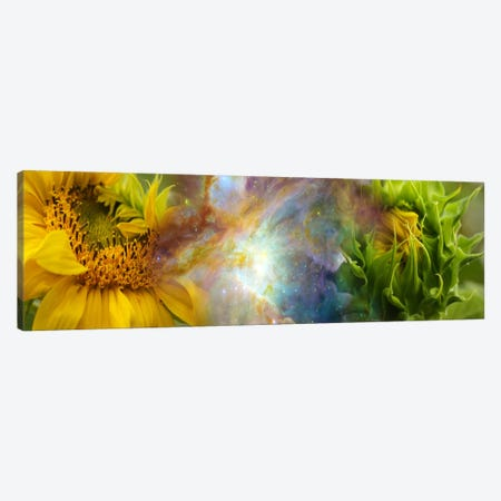 Two sunflowers with gaseous nebula Canvas Print #PIM9962} by Panoramic Images Art Print