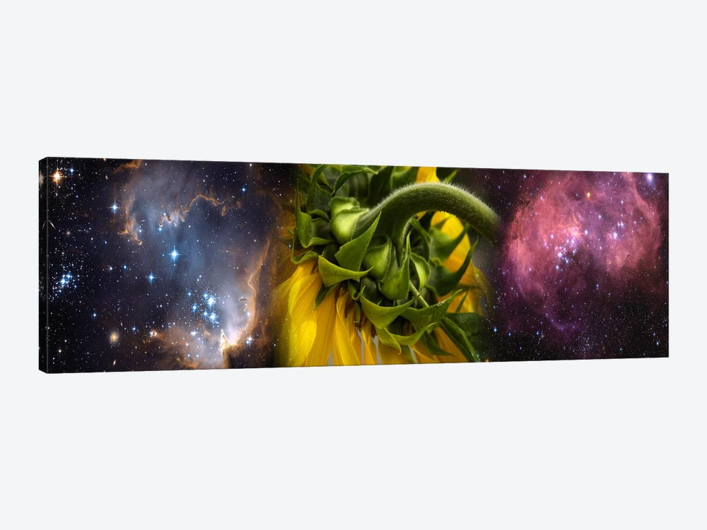 Sunflower in the Hubble cosmos by Panoramic Images 1-piece Canvas Wall Art