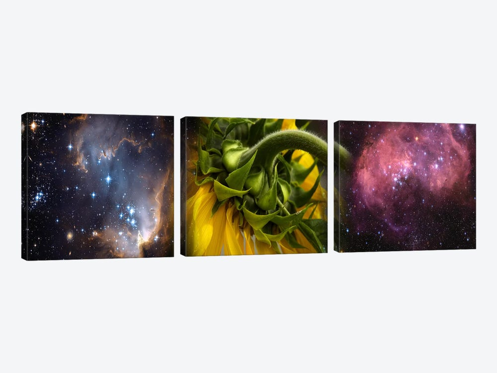 Sunflower in the Hubble cosmos by Panoramic Images 3-piece Canvas Art