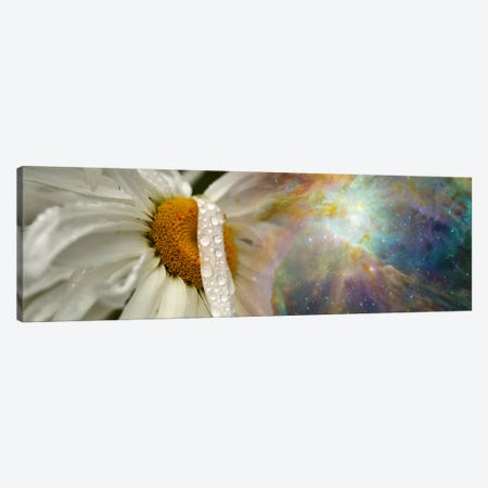 Daisy with Hubble cosmos Canvas Print #PIM9964} by Panoramic Images Canvas Wall Art