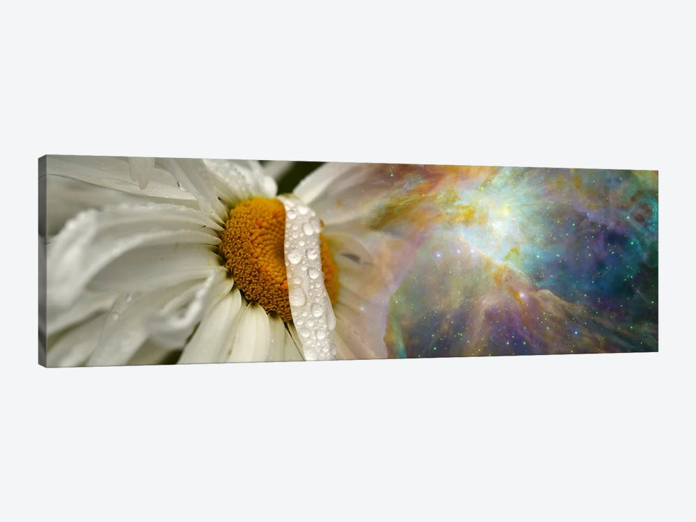 Daisy with Hubble cosmos by Panoramic Images 1-piece Art Print
