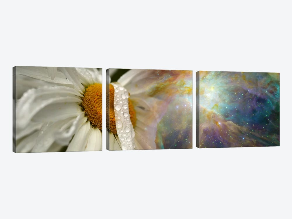 Daisy with Hubble cosmos by Panoramic Images 3-piece Canvas Art Print