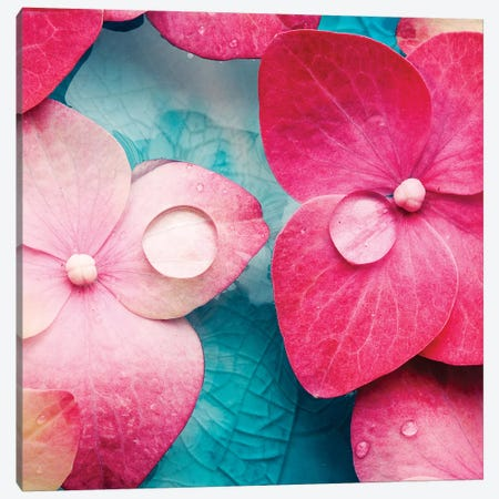 Pink Flowers Canvas Print #PIS100} by PhotoINC Studio Canvas Print