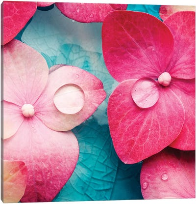 Pink Flowers Canvas Art Print