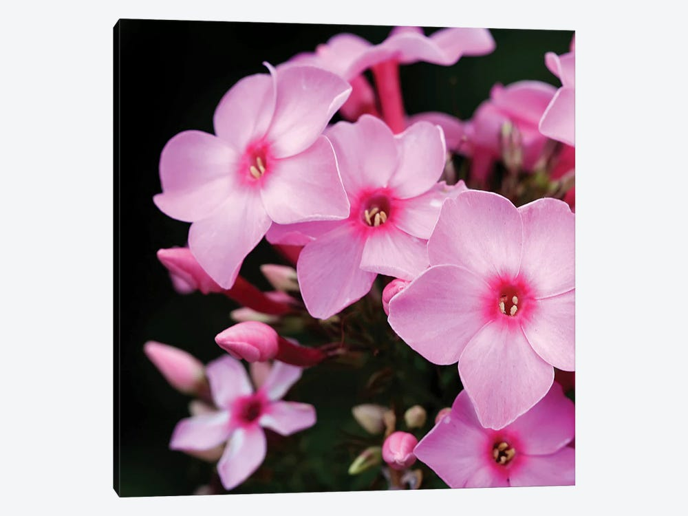 Pink Flowers I by PhotoINC Studio 1-piece Canvas Print