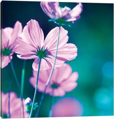 Pink Flowers II Canvas Print #PIS102