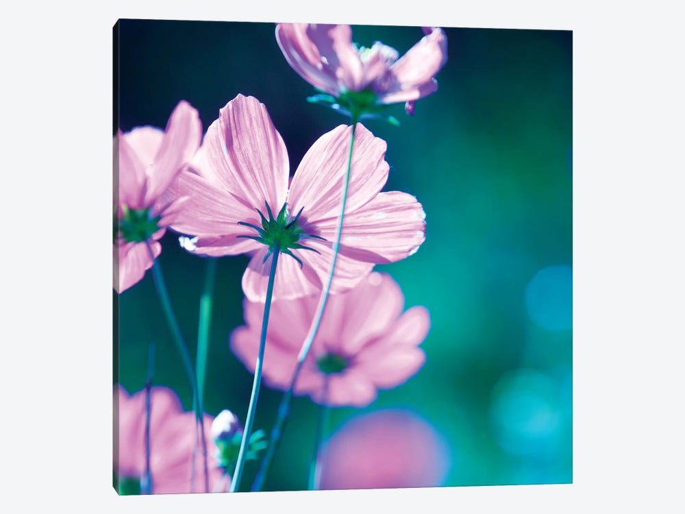 Pink Flowers II by PhotoINC Studio 1-piece Canvas Wall Art