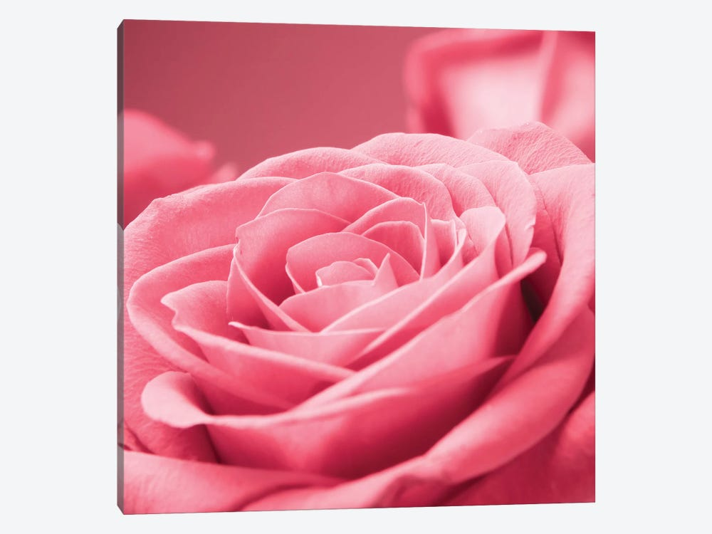 Pink Rose I by PhotoINC Studio 1-piece Canvas Print