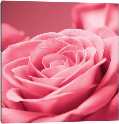 Pink Rose I Canvas Art Print