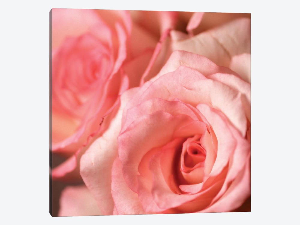 Pink Rose II by PhotoINC Studio 1-piece Canvas Wall Art