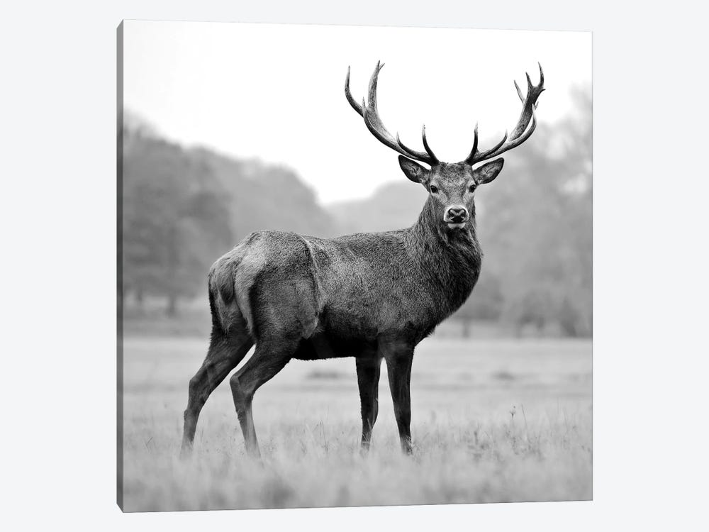 Proud Deer by PhotoINC Studio 1-piece Art Print