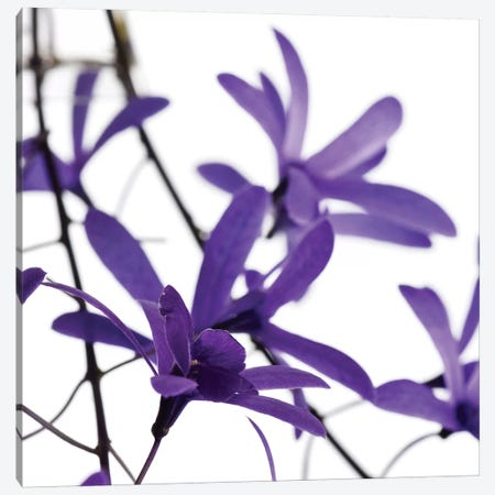 Purple Blossom I Canvas Print #PIS106} by PhotoINC Studio Canvas Art