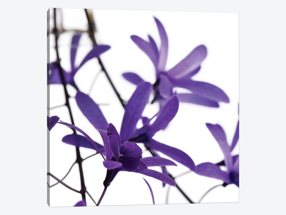 Purple Blossom I by PhotoINC Studio 1-piece Canvas Artwork