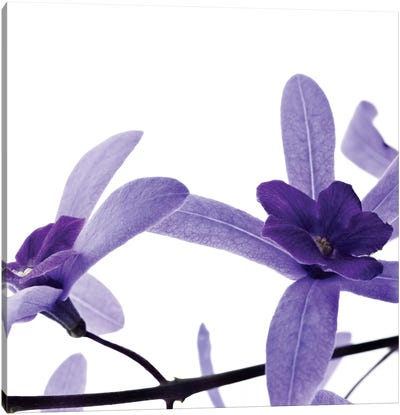 Purple Blossom II Canvas Art Print