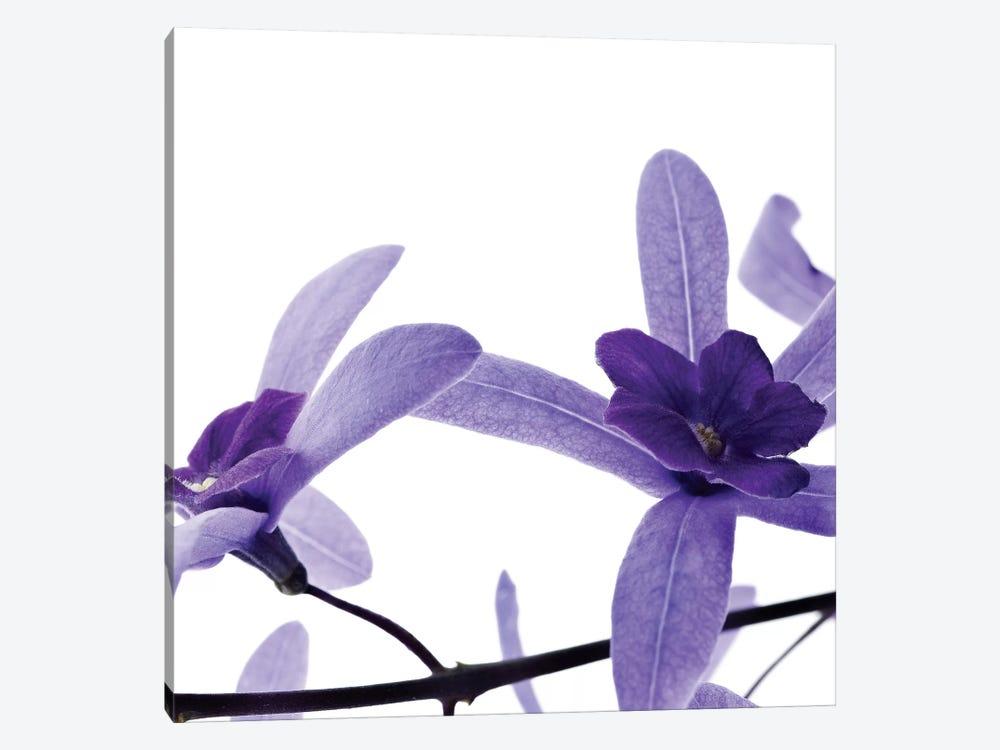 Purple Blossom II by PhotoINC Studio 1-piece Canvas Print