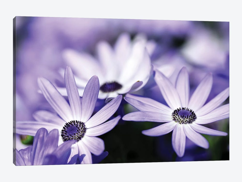 Purple Flowers by PhotoINC Studio 1-piece Canvas Print