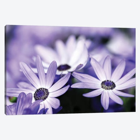 Purple Flowers Canvas Print #PIS109} by PhotoINC Studio Canvas Art Print