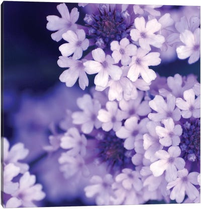 Purple Flowers II Canvas Art Print